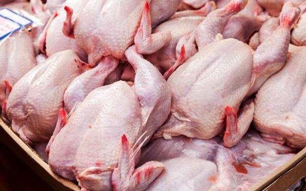 تولید بیش از 8 هزار تن گوشت سفید در خرم بید