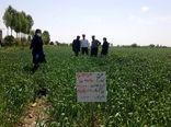 بازدید از طرح 1.5هکتاری مقایسه تراکم کاشت گندم در شهرستان ری