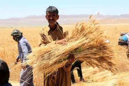 8742 تن گندم و جو از کشاورزان خراسانجنوبی خریداری شد