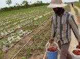 ظرفیت اشتغالزایی دربخش کشاورزی البرز است