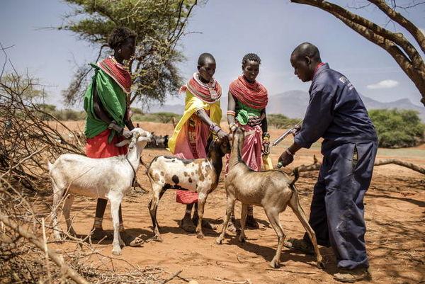 اقدامات فائو برای رویارویی با خشکسالی