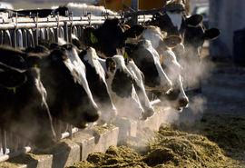برخورد قانونی با آزمایشگاههای غیرمجاز مداخلهکننده در گاوداریها و کارخانجات تولیدکننده فرآوردهای شیری تولید کننده خوراک