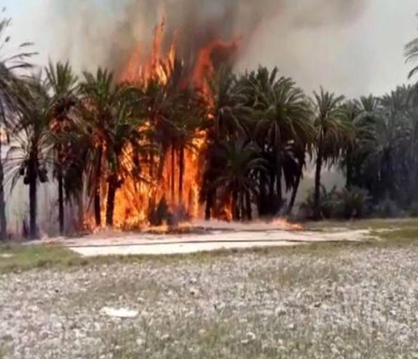 ۶۳۵ نخل استان بوشهر ایستاده سوخت