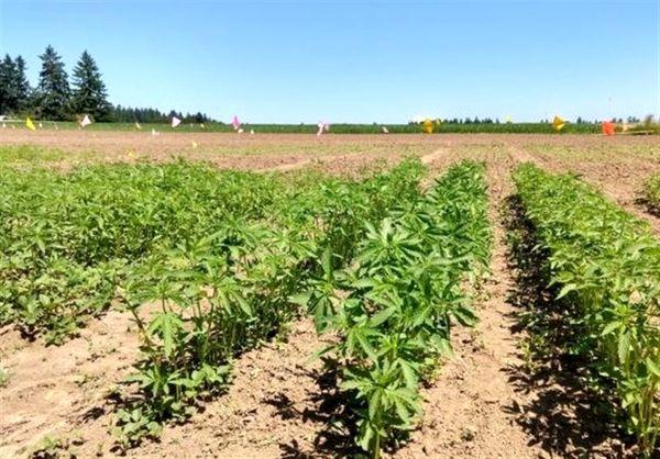 تکمیل زنجیره تولید محصولات کشاورزی کشور برای نخستینبار در خراسان جنوبی