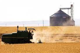 پرداخت بیش از ۹۴ میلیارد از وجوه گندم خریداری شده در خراسان شمالی