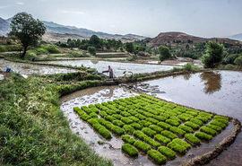 لایحه «اصلاح قانون حفظ کاربری اراضی زراعی و باغ ها»