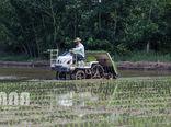 کشت مکانیزه برنج و کاهش 40 درصدی هزینهها