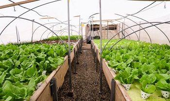 برای توسعه گلخانه راهی جز تسهیل صدور مجوز نیست