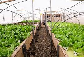 رشد 200 درصدی توسعه گلخانه ها در کشور