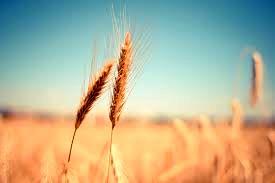 تغییرات اقلیمی حشرات را گرسنهتر میکند