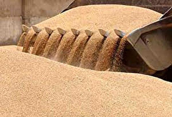 خرید 290 هزار تن گندم در استان آذربایجان شرقی