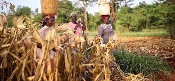 استفاده از تکنولوژی تولید بذر برای کاهش مصرف آب