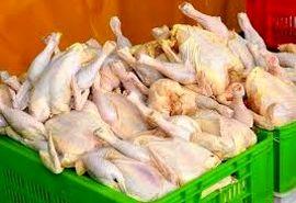 قیمت گوشت مرغ کاهش مییابد