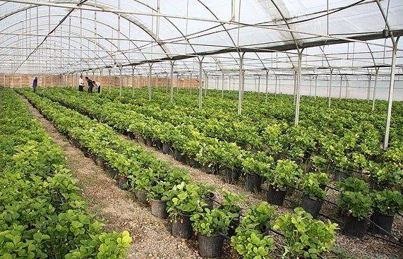 توسعه 5800 هکتاری گلخانه ها نیازمند سرمایه گذاری 20 هزار میلیارد تومانی