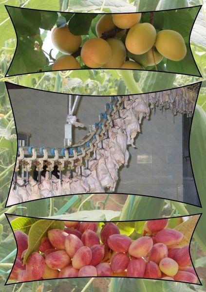 تولید ۱.۷ میلیون تن محصولات کشاورزی و دامی در استان یزد