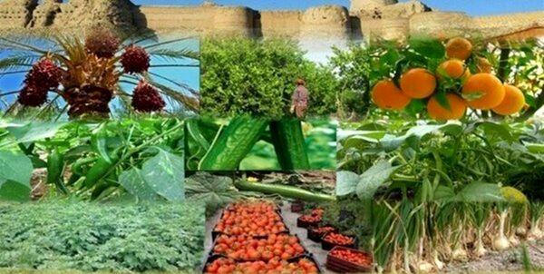 طرح «پایانه صادراتی محصولات کشاورزی» در کردستان اجرا میشود