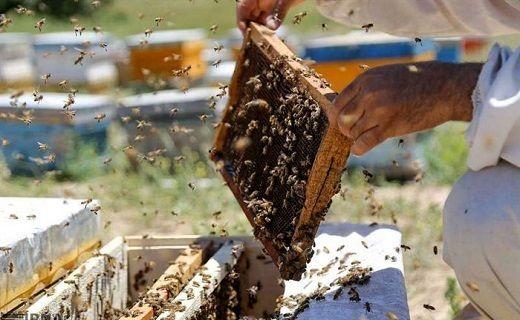 زنبورداری اصفهانیها در استانهای جنوبی
