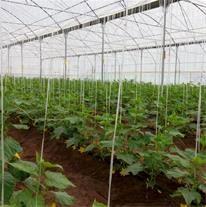 8 طرح آب و خاک و گلخانه در شهرستان ارزوئیه به بهرهبرداری میرسد