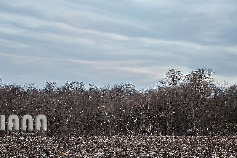 زباله دانی به وسعت یک جنگل