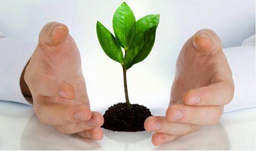 اجرای بیمه پایه محصولات زراعی و باغی برای نخستین بار در کشور