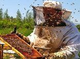 سرشماری زنبورستانها در سال ۱۴۰۰ انجام نمیشود