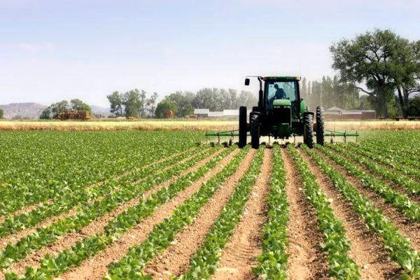 5 قهرمان کشاورزی؛ اتیوپی و ساحل عاج اول، کنیا دوم، مراکش سوم و نیجریه چهارم شدند/ بانک جهانی: رشد اقتصادی آفریقا امسال به 2.5 درصد میرسد/ سرمایهگذاری بیشتری در بخش کشاورزی انجام میشود