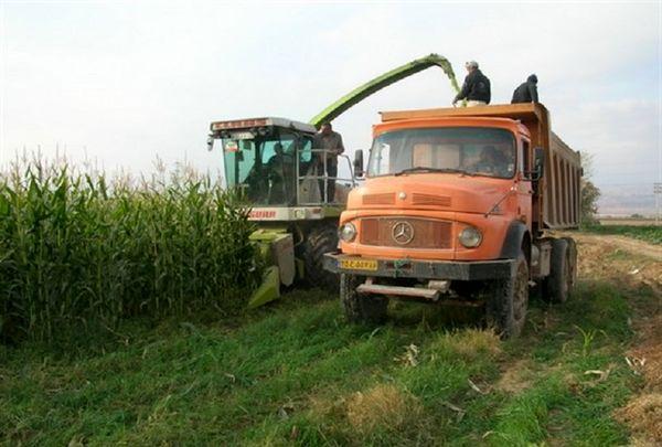 ۴۲۵ هزار تن علوفه در یزد تولید شد
