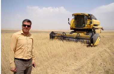 آغاز  برداشت  محصول گندم از مزارع  شهرستان آشتیان و تحویل به مراکز مجاز خرید گندم .