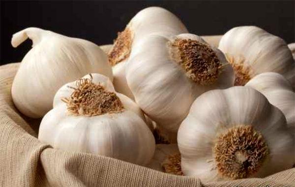 پیشبینی برداشت ۴۶ هزار تن سیر از مزارع استان همدان