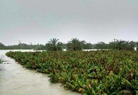 اختصاص 3670 میلیارد ریال برای جبران خسارت سیل دی ماه به بخش کشاورزی