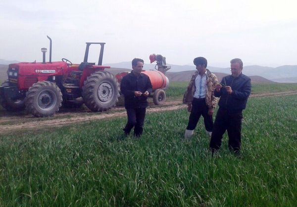آغاز مبارزه با آفت سن غلات در آذربایجانشرقی