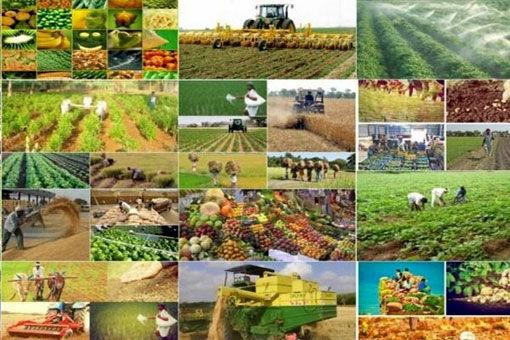 سطح کشت تحت پوشش طرح جهش تولید در دیمزارهای شهرستان سراب به 9 هزار هکتار رسید