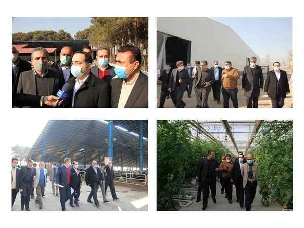 بازدید رئیس سازمان مدیریت و برنامه ریزی استان تهران از سه پروژه کشاورزی