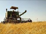 ۱۵۳ هزار تن گندم تحویل مراکز خرید دهلران شد