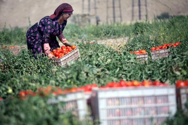 رشد 200 درصدی توسعه صنایع تبدیلی استان کرمانشاه طی 8ماه اخیر