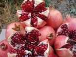 کاهش برداشت محصول انار در باغات تفت