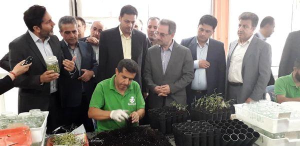 بازدید استاندار تهران از بزرگترین شرکت زیستفناوری گیاهی ایران در ملارد