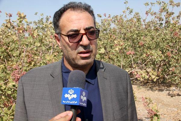 کشت پسته در 8500 هکتار از اراضی استان تهران