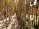 کارگاه آموزشی طرح توسعه زراعت چوب برگزار شد