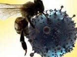 واکنش موسسه سرمسازی رازی به ادعای مطرحشده در خصوص درمان قطعی کرونا (کووید-19) با زهر زنبورعسل