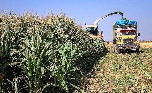 اولویت پرداخت تسهیلات برای کشاورزان خسارت دیده سربیشه