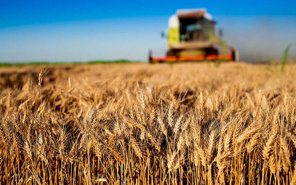 ثبت رکوردی جدید  در عرضه جهانی غلات