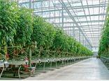 صادرات گلخانهای تیران و کرون ۳۰ میلیون دلار ارزآوری دارد