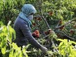 ۴۰ هزار هکتار باغات اصفهان درگیر تنشآبی هستند