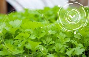 کاربرد نانوفناوری در کشاورزی مدرن