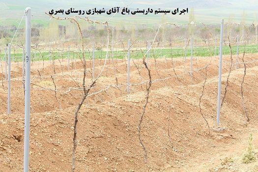داربستی کردن باغات انگور، گامی برای افزایش دوبرابری محصول در شهرستان شازند
