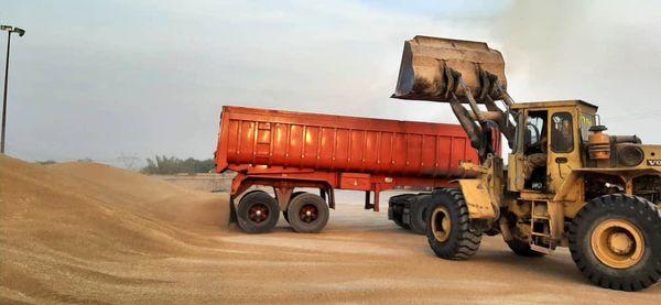 خرید تضمینی بیش از ۶۰۰ هزار تن گندم از کشاورزان خوزستانی