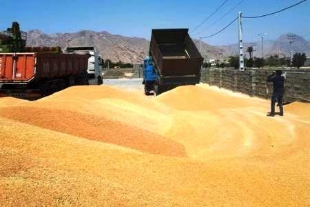 تعاون روستایی شیروان یکهزار و 896 تن محصول کشاورزی را خرید