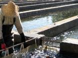 """تاثیر اجرای طرح """"یاوران تولید"""" در پرورش محصولات شیلاتی"""