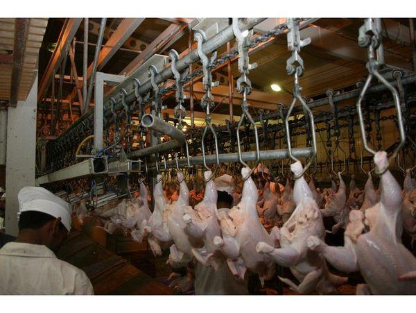 توزیع 910 تن مرغ در ساری